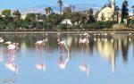 دریاچه نمک لارناکا، دومین دریاچه نمک بزرگ قبرس