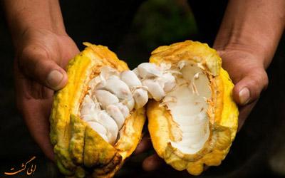 میوه کاکائو