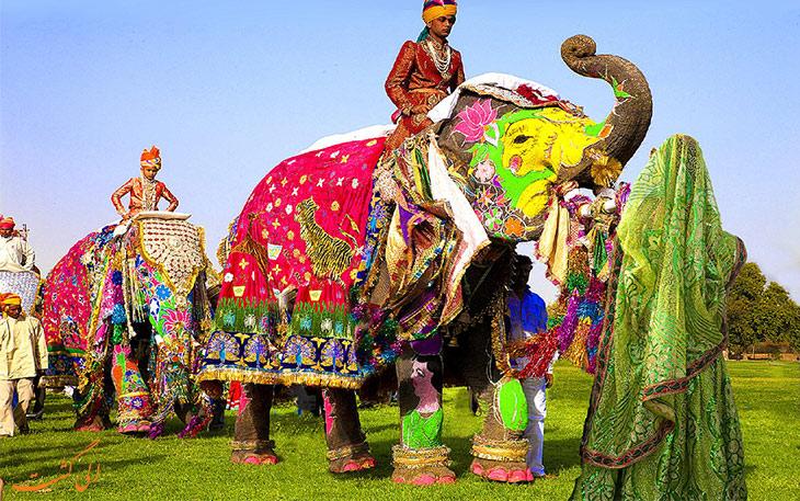 برگزاری جشنواره فیل
