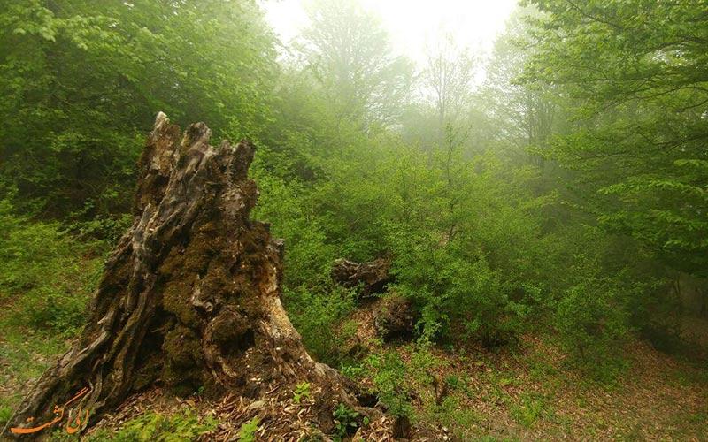 جنگل-الیمستان