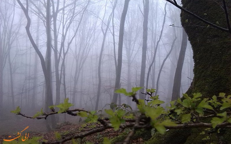 جنگل پاسند