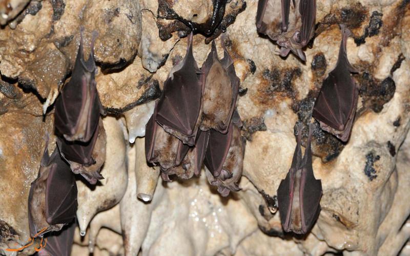 خفاش ها در غار رودافشان