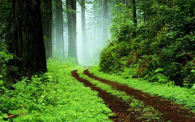 طبیعت گردی در گیلان