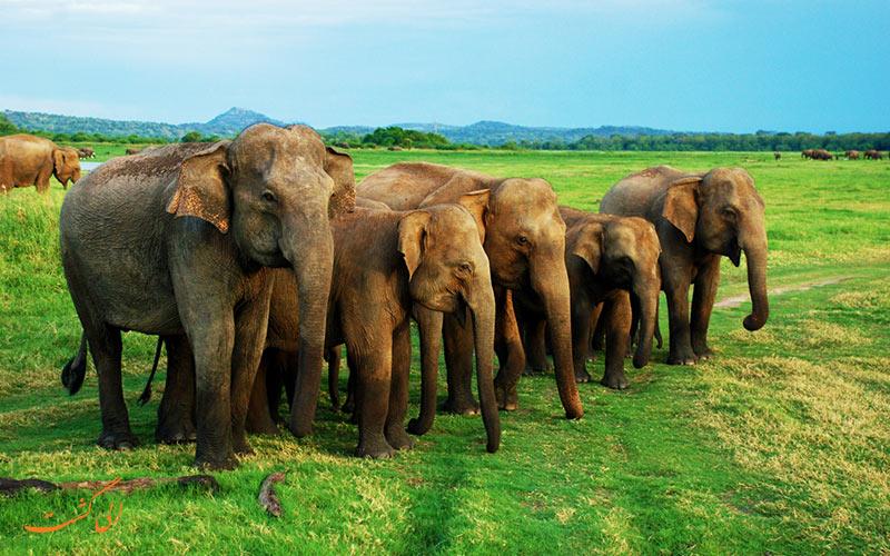 پارک های ملی سریلانکا