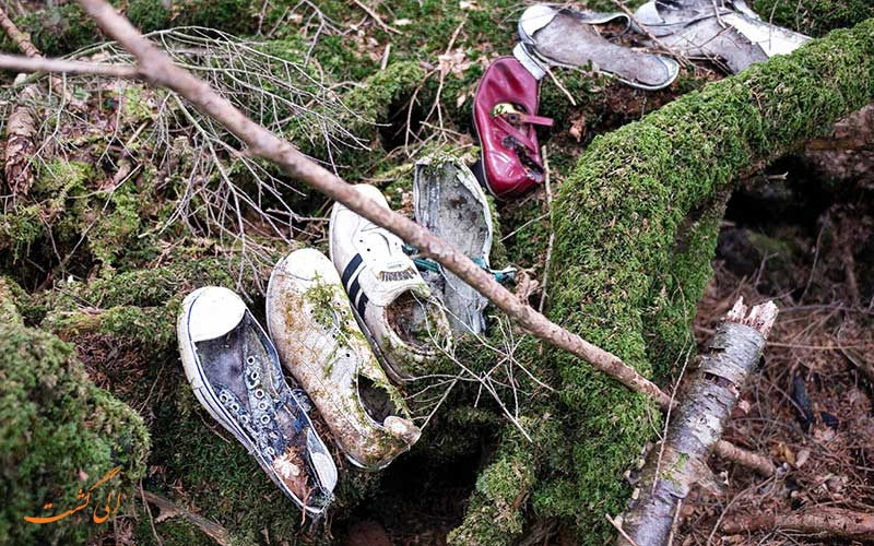 بخشی در جنگل خودکشی
