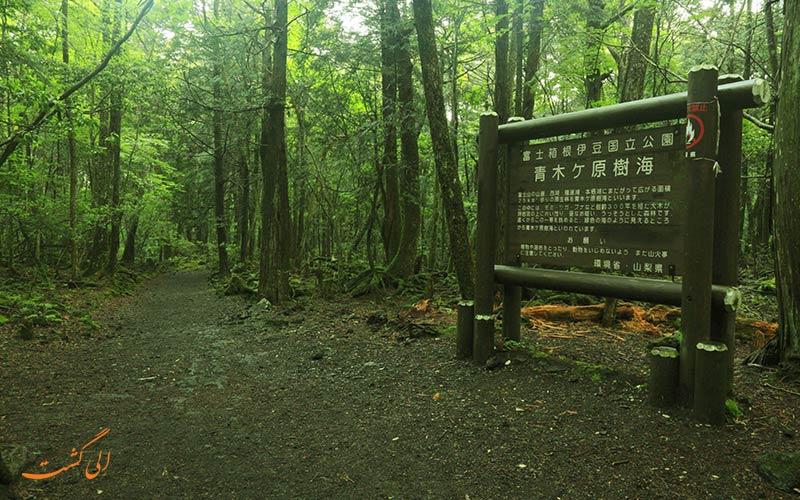 تابلوهای جنگل