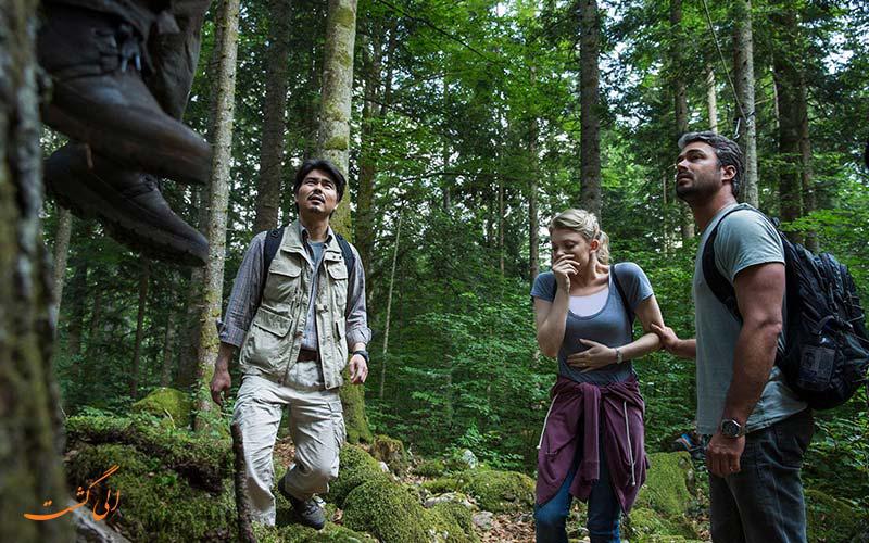 توریست های بازدیدکننده از جنگل