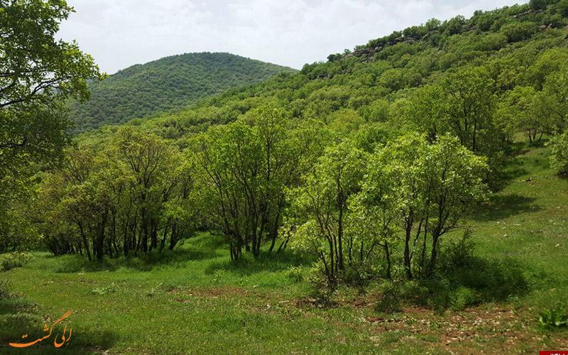 جنگل نای انگیز در استان لرستان