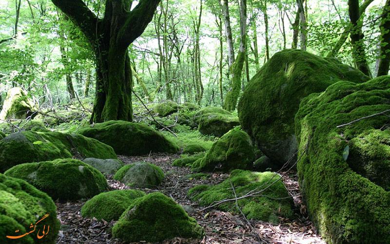 جنگل دوهزار در تنکابن