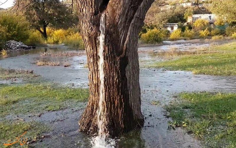 درختی که از آن آب بیرون می ریزد