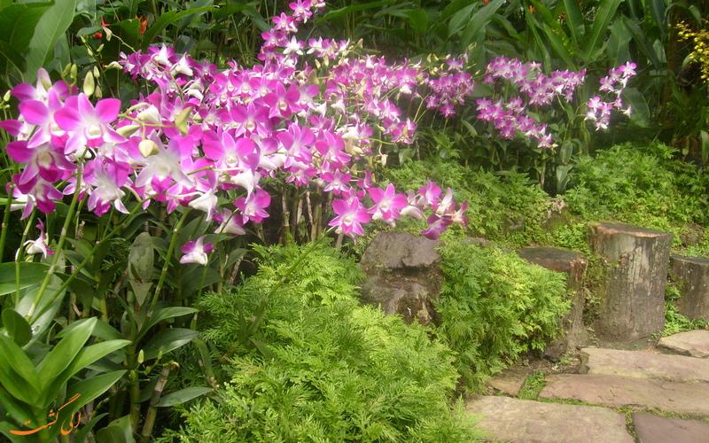باغ ارکیده در سنگاپور