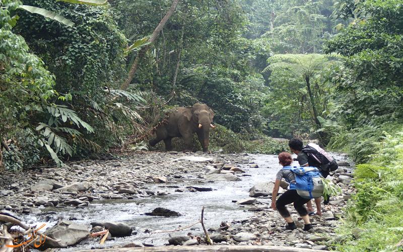 ماجراجویی در جنگل های تایلند