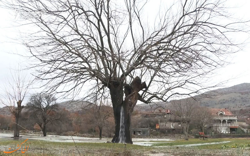 چشمه درختی روستای دینوسا در مونتنگرو