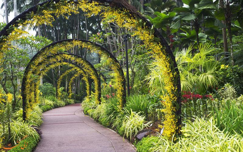 باغ ملی ارکیده سنگاپور