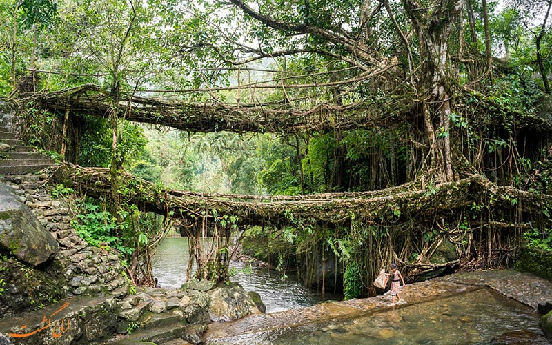 پل ریشه ای چراپونجی در مگالایا