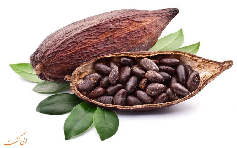 گیاه کاکائو