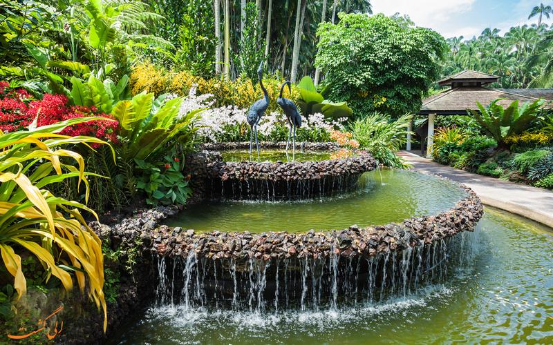 باغ زیبای ارکیده در سنگاپور