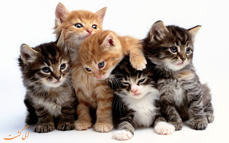 خرخر گربه ها!
