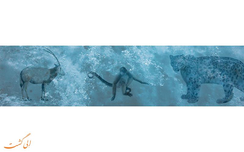 حیوانات یخ زده