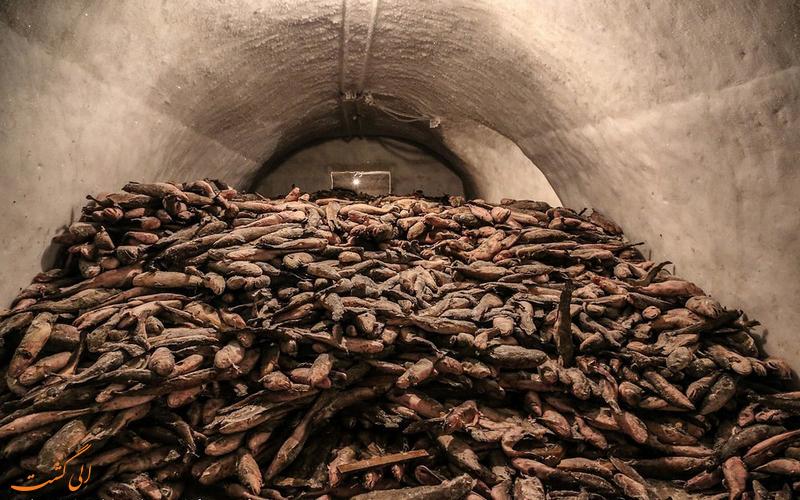 انبار ماهی های سیبری