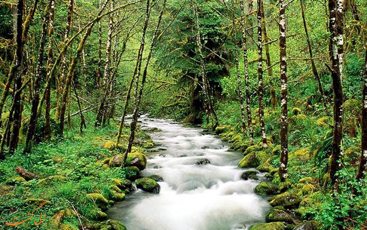 جنگل حفاظت شده سیناراجا