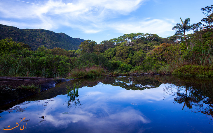 جنگل سیناراجا