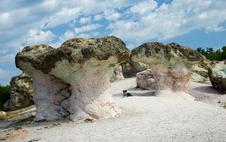 پدیده قارچ های سنگی