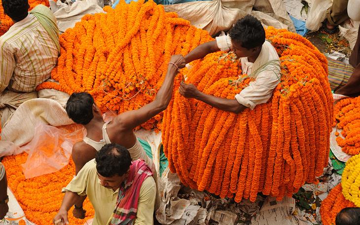 بازار گل هند