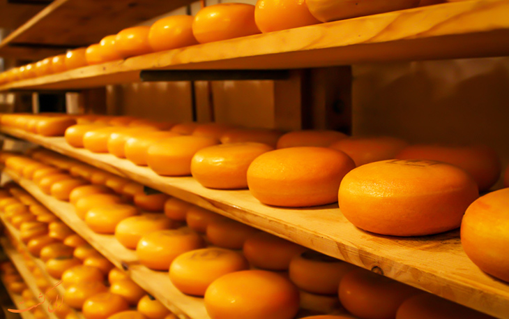 طرز تهیه پنیر گودا