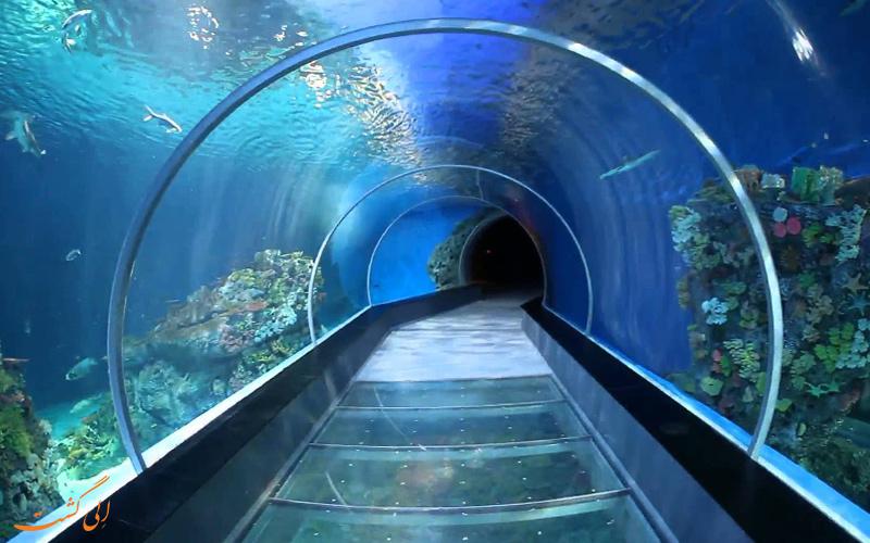 قدم زدن زیر آب