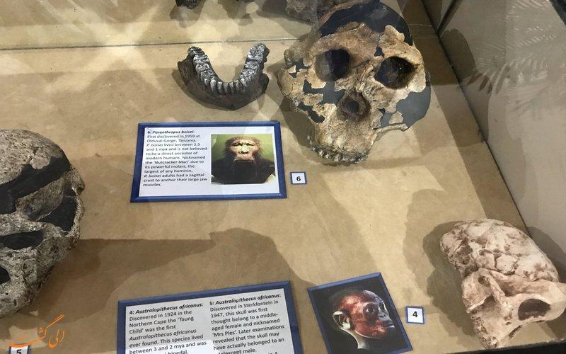 موزه گلوگاه اولدوپای