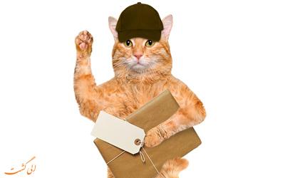 گربه های نامه رسان