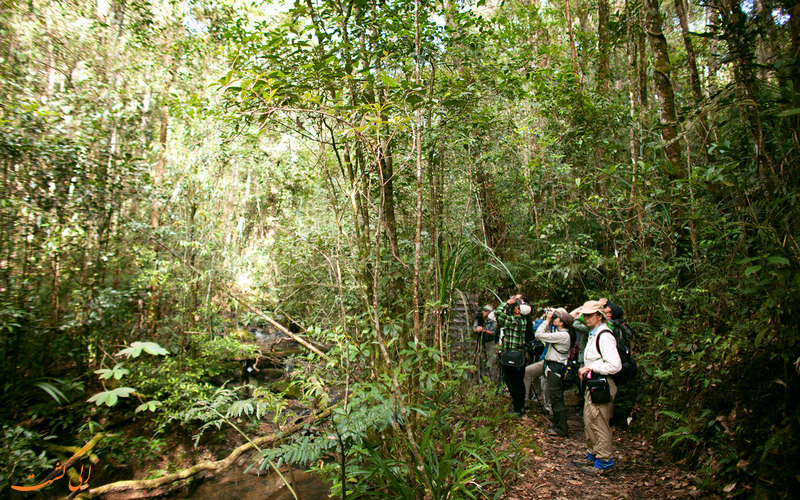 پیاده روی در جنگل های بکر تایلند