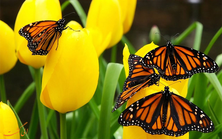 خانه پروانه ها وارنا