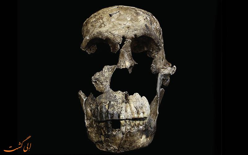 ااسکلت انسان غول پیکر در آفریقا