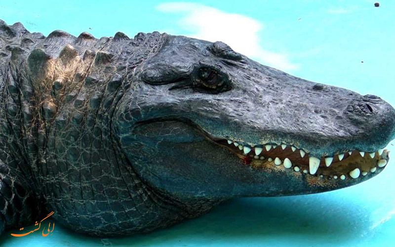 موجا، پیرترین تمساح دنیا