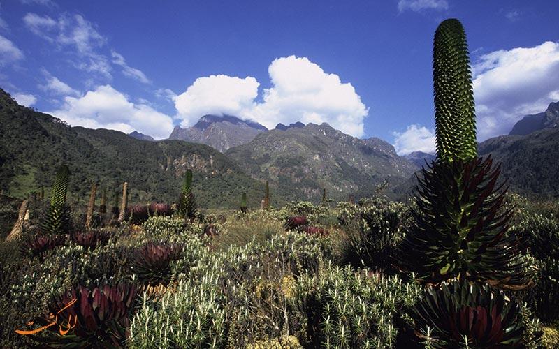 پارک ملی کوه های روئنزوری