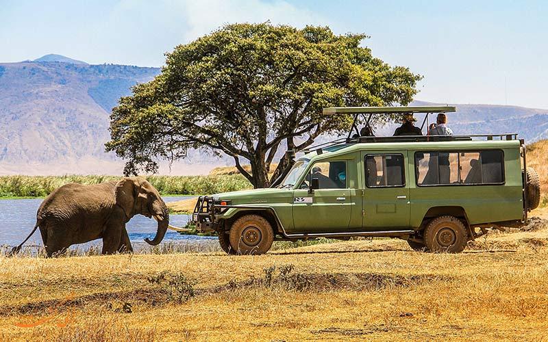 سافاری در آفریقا