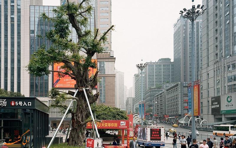 جنگل های شهری چین