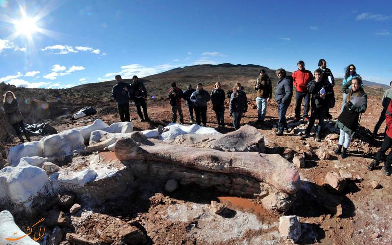 کشف بزرگترین دایناسور جهان در آرژانتین