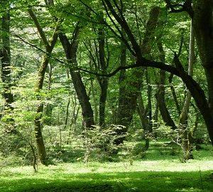 پارک جنگلی نور مازندران