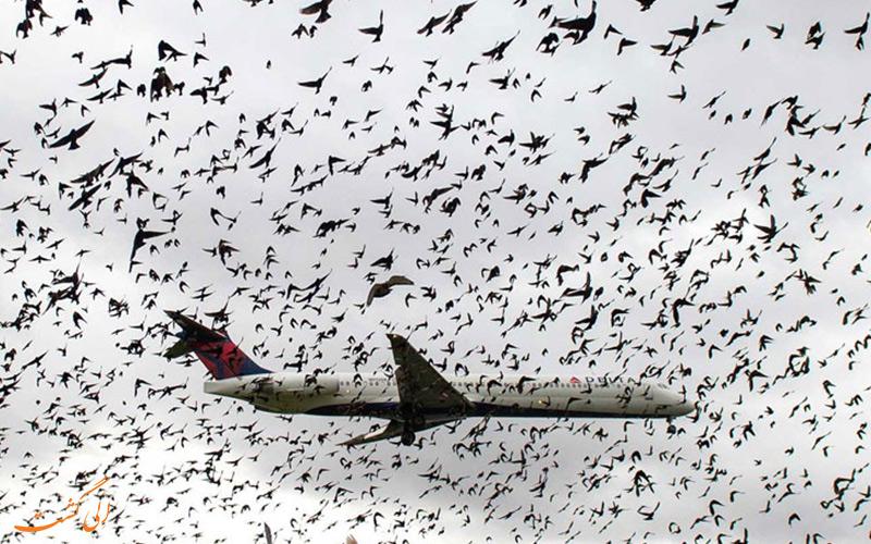 این باورهای غلط درباره ی هواپیما را دور بریزید!
