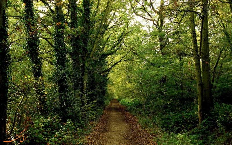 طبیعت سرسبز پارک جنگلی نور