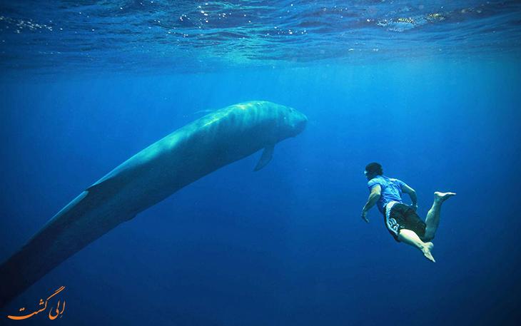 غواصی با نهنگ ها