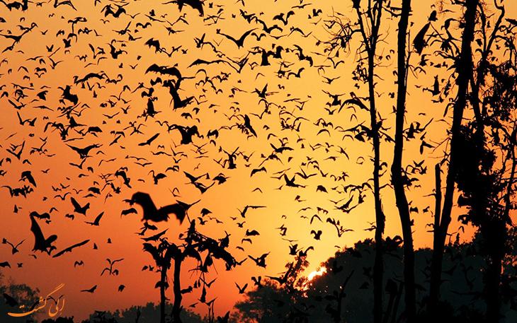 تماشای خفاش ها
