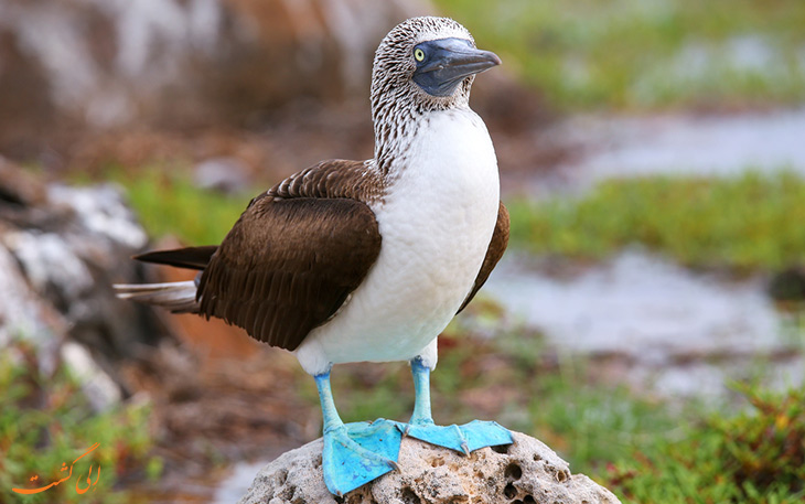 پرندگان اکوادور