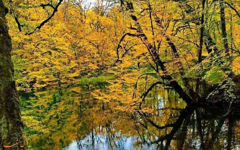 دریاچه فراخین در دل جنگل