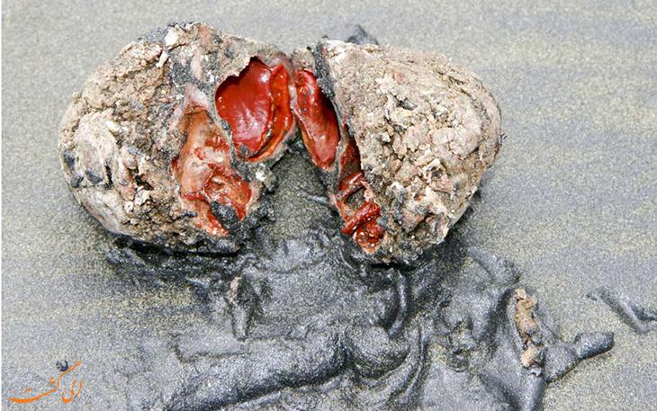 داخل بدن سنگ های زنده