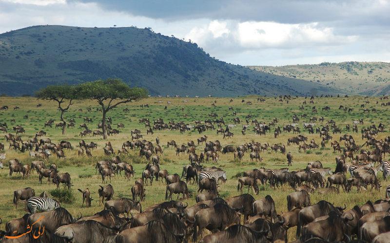 مهاجرت سالیانه حیات وحش در تانزانیا