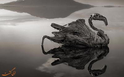 دریاچه نمک ناترون